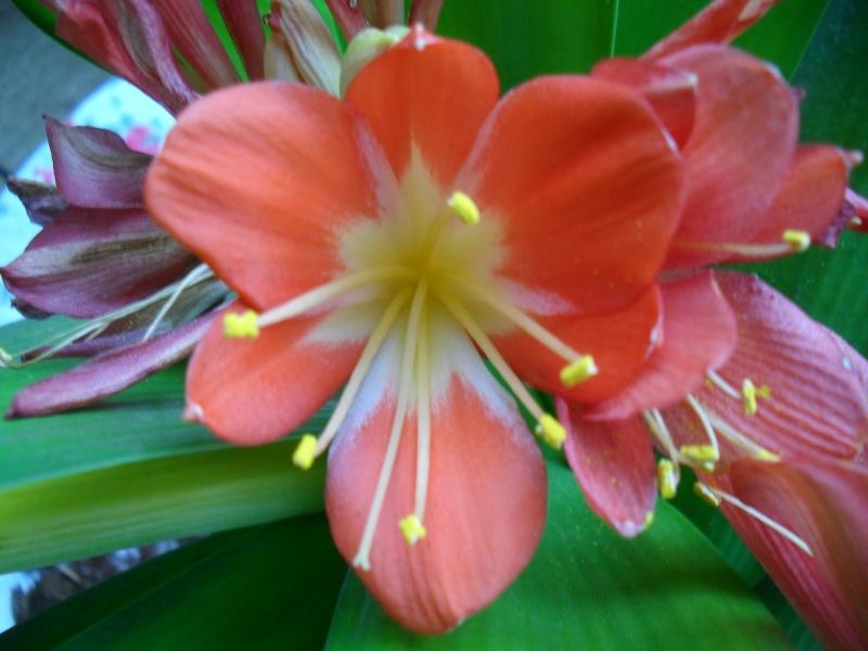 Floraisons de janvier 00710