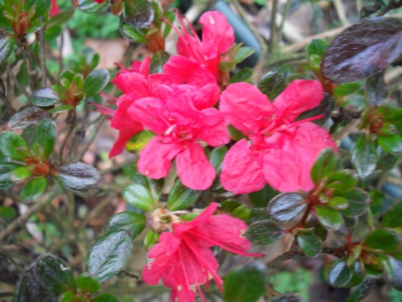 Floraisons de janvier - Page 2 00711