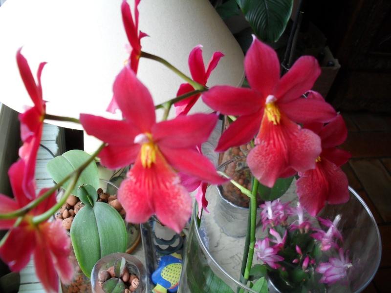 Floraisons de janvier 00913