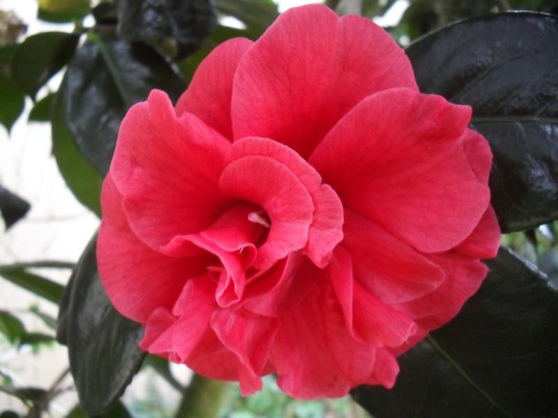 Floraisons de janvier - Page 3 01114