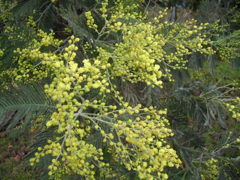 Floraisons de janvier 01510