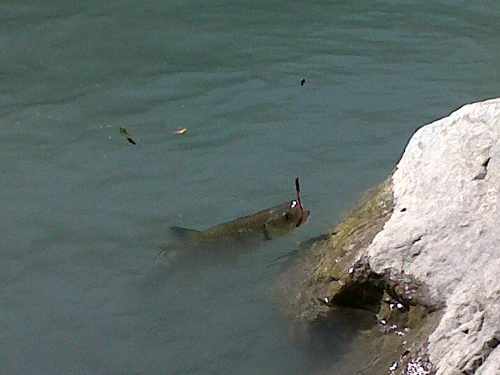 ouverture pêche à la truite 2012 !!  - Page 38 Img-2026