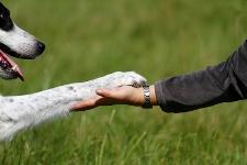 Doktor und Therapeut in Personaluniun namens Hund Oliver11