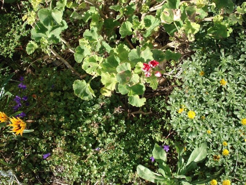 Jardin de Tropicana : Maroc /Casablanca - Page 2 00112