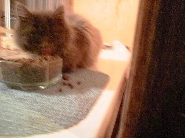 Toulouse chaton gris de 3 mois. - Page 2 Photo_10