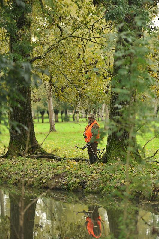 Grand Gibier en Octobre et en Charente Poitou Dsc_6511