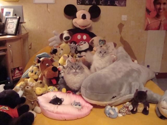 concours photos: le chat en groupe Dsc04711