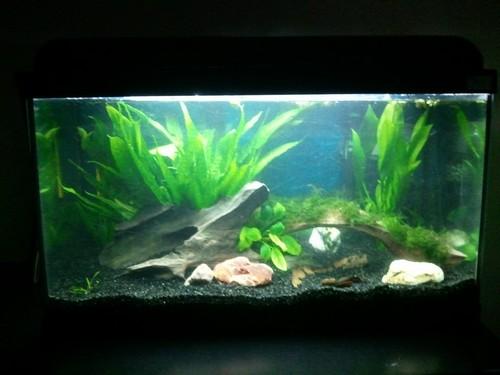 Mon Aquarium 54L Photo114