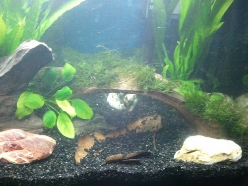 Mon Aquarium 54L Photo116