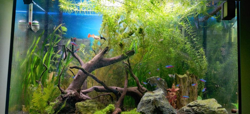 Mon Aquarium aquatlantis fusion 80 - Page 3 Apres10