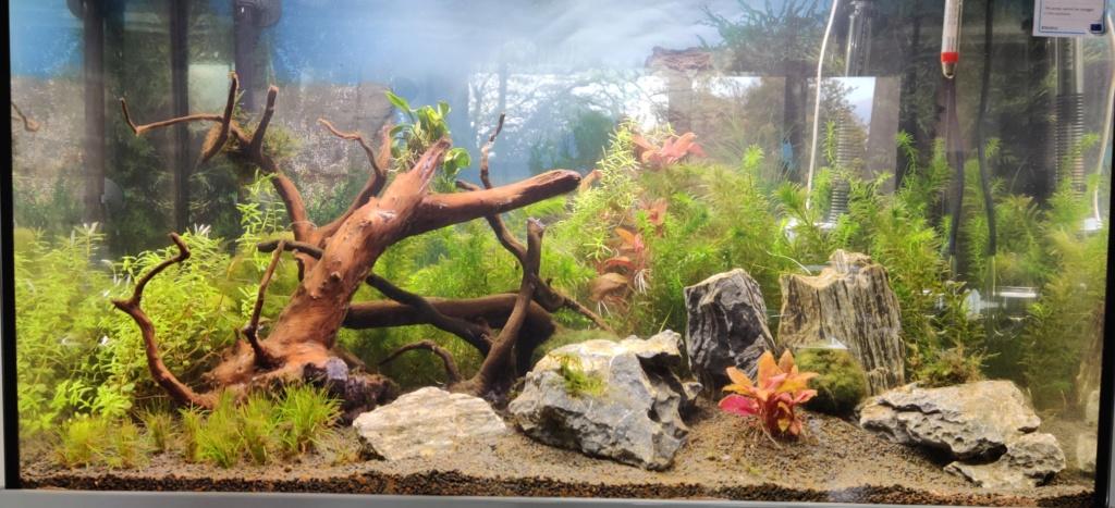 Mon Aquarium aquatlantis fusion 80 Img_2010