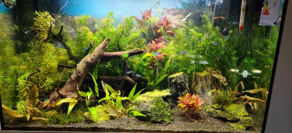 Mon Aquarium aquatlantis fusion 80 Img_2011