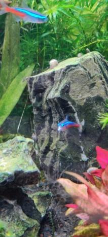 Bouche blanche sur un poisson Poisso10