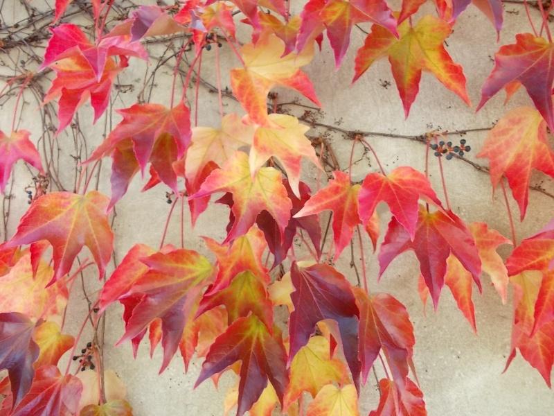 Золотая осень Dscn1710