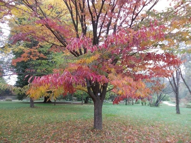 Золотая осень Dscn1811