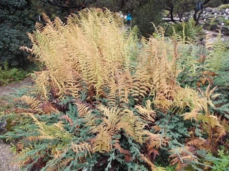 Золотая осень Dscn1814