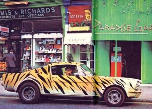Vieille photo qui inclus des Mustang 65-73  Tiger_10