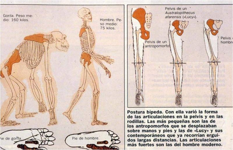 ~~Prehistoria~~ Paleoantropología Imagen10
