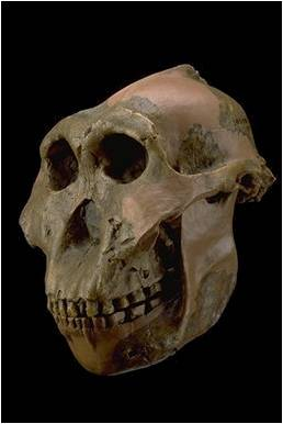~~Prehistoria~~ Paleoantropología Imagen12