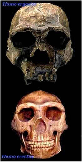 ~~Prehistoria~~ Paleoantropología Imagen13