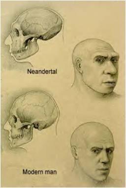 ~~Prehistoria~~ Paleoantropología Imagen14