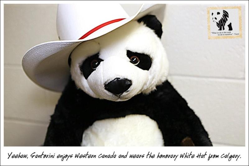 Yanni adopte un bébé panda 22116810