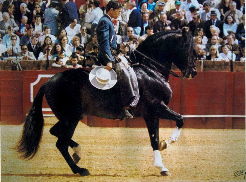 Pur race Espagnol Exogra10