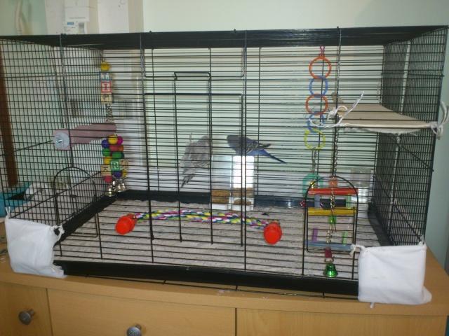 La cage de Suzie et Lily. Dsc_0110