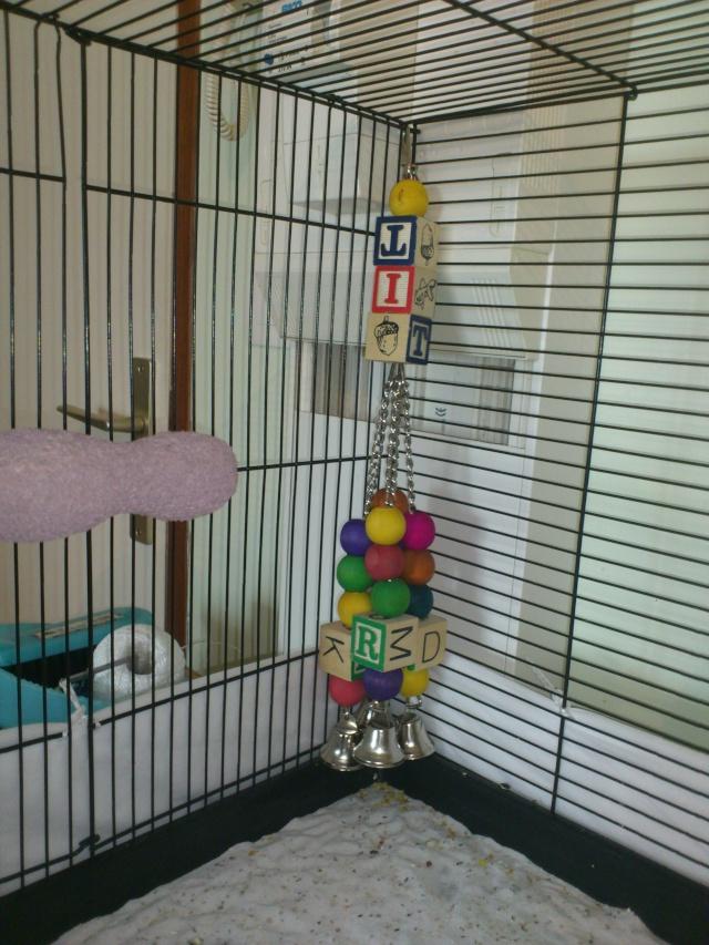 La cage de Suzie et Lily. Dsc_0111