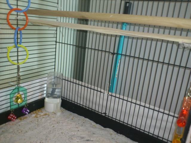 La cage de Suzie et Lily. Dsc_0112