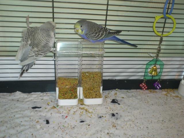 La cage de Suzie et Lily. Dsc_0113