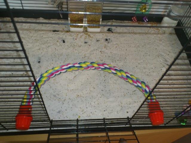 La cage de Suzie et Lily. Dsc_0114