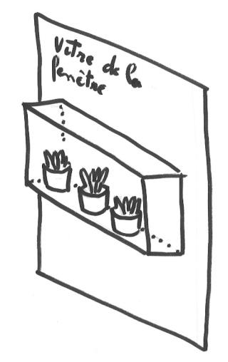 Dimension de plantes adultes pour mini terrarium Clipbo11