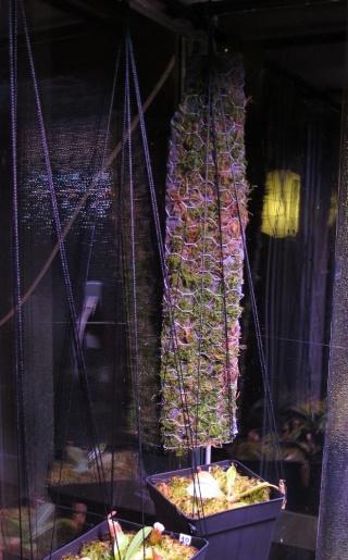 Construction terrarium lowland pour Nepenthes Final611