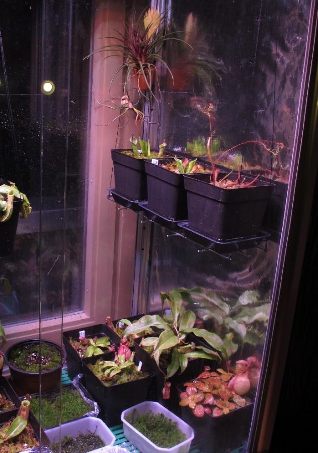 Construction terrarium lowland pour Nepenthes Terra-10