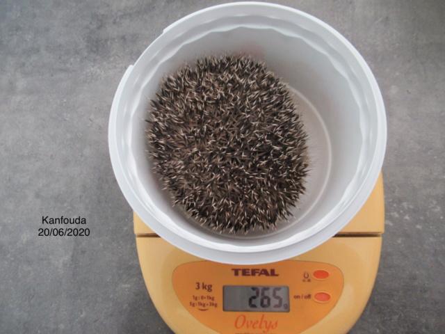 KANFOUDA, trouvé le 18 juin 2020 60964a10