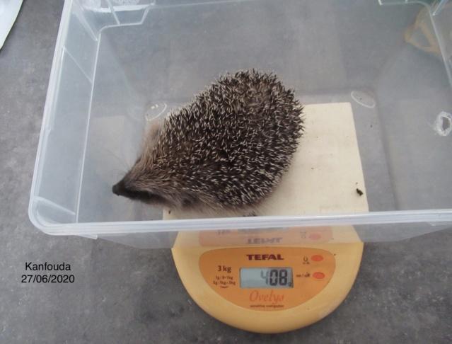 KANFOUDA, trouvé le 18 juin 2020 9f416f10