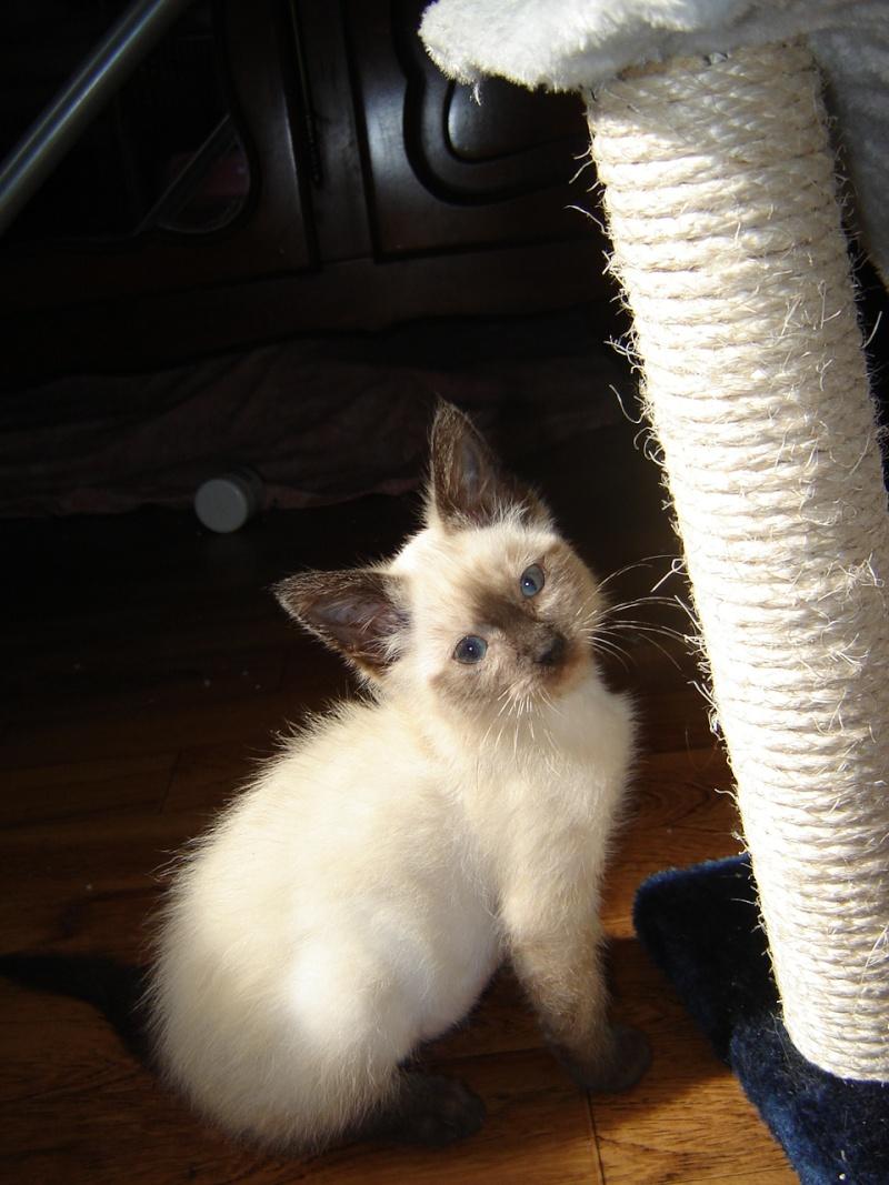 Missy (04-09-2012) Dsc05211