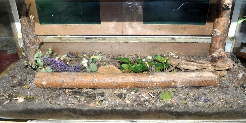 Quels terrarium choisir/construire Insect11