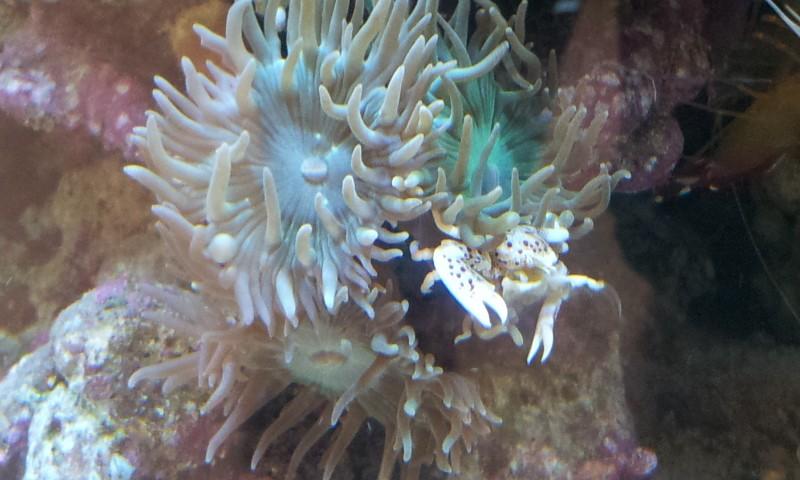 Quel crabe acheté 2012-013