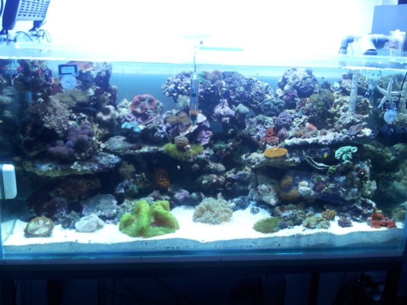 "Mon nouvel aquarium ""david59"" 2012-029"