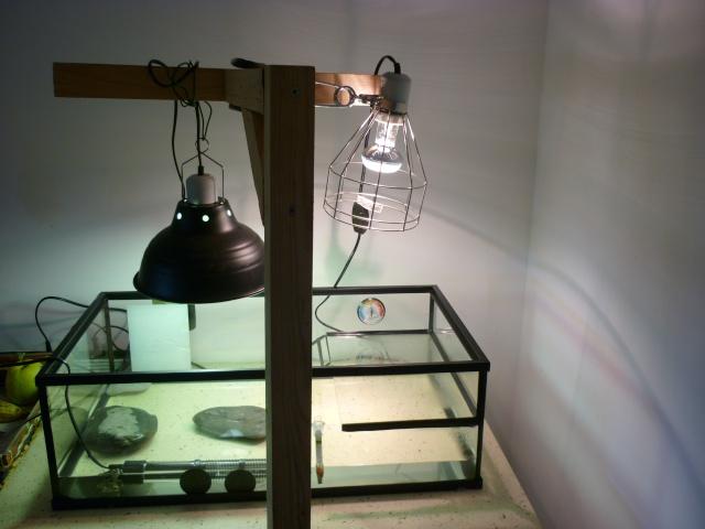 santé pour un juvenile mauremys sinensis URGENT svp Aquari16