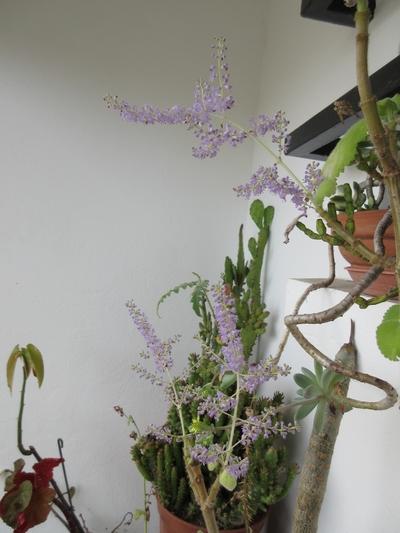 Mes plantes dans la véranda - Page 8 Img_0939