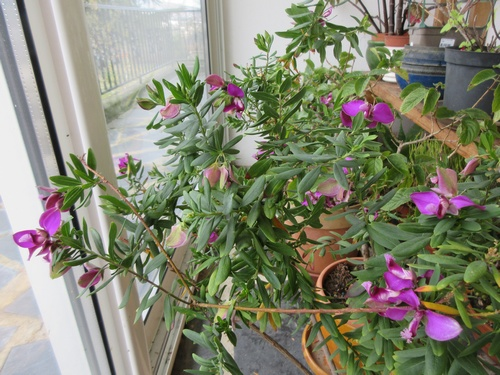 Mes plantes dans la véranda - Page 8 Img_0940