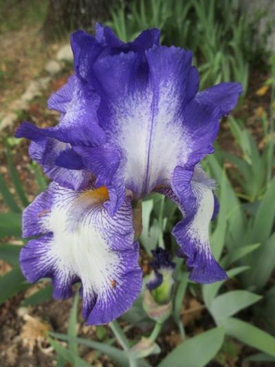 2020 - Iris ! - Page 2 Img_1211