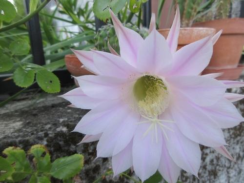 Cactus  Img_1563