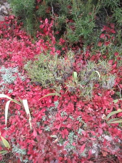 Couleurs d'automne !!! Img_1734