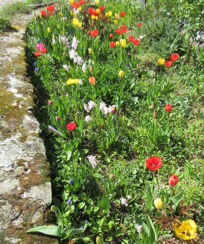 Tulipes. - Page 4 Img_2034
