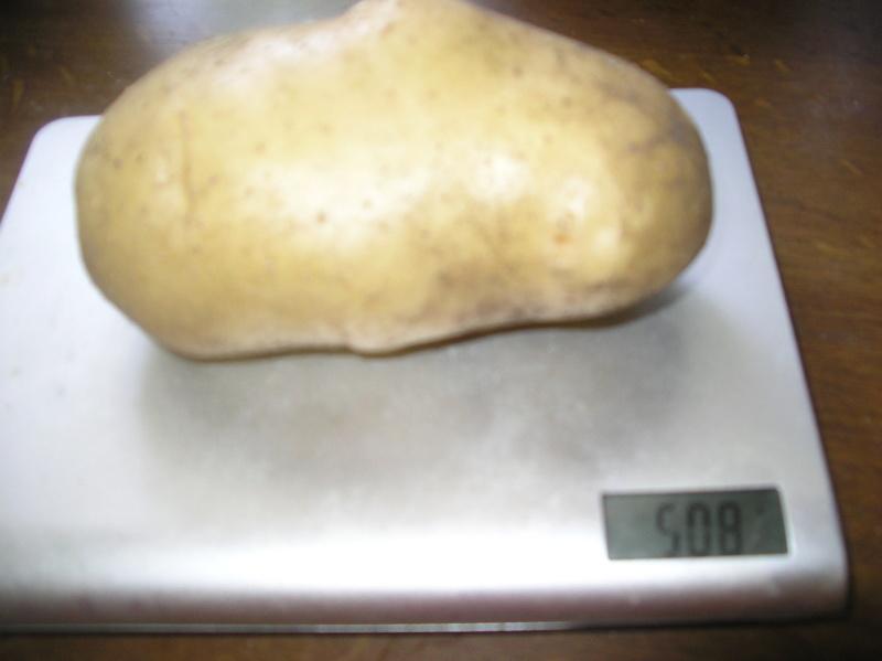 plants de patates - Page 16 Imgp0056