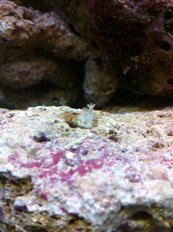 Nano reef de 60L (de plus!) 6e1cc110